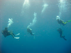 11月19~23日 Similan&Surin Cruise_d0086871_1401286.jpg