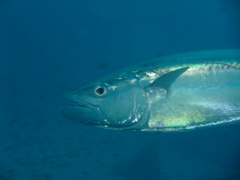 11月19~23日 Similan&Surin Cruise_d0086871_15172215.jpg