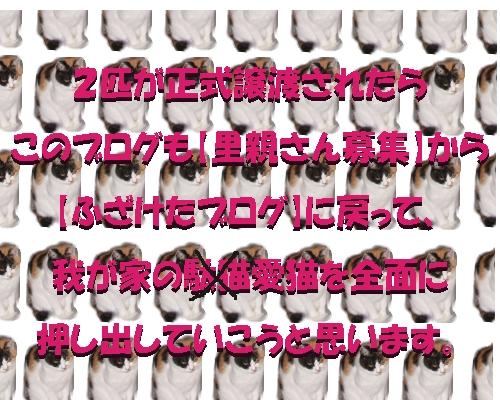a0131387_2310999.jpg