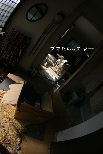 c0089005_22481075.jpg