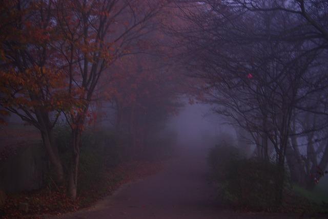霧の朝_d0147812_12312227.jpg