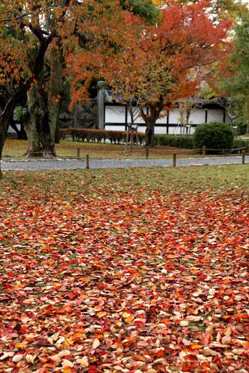 二条城 紅葉の盛り_e0048413_2050231.jpg