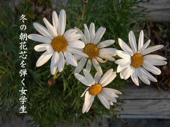 冬の朝_e0099713_2053507.jpg