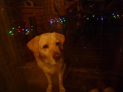 クリスマスツリー 【時々M's MEMO】_f0111415_23161744.jpg
