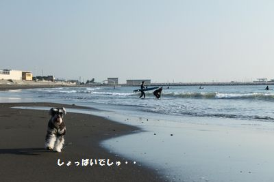 f0197317_1311420.jpg