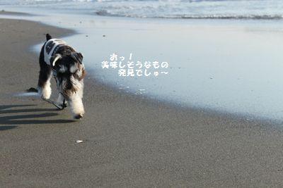 f0197317_13243640.jpg