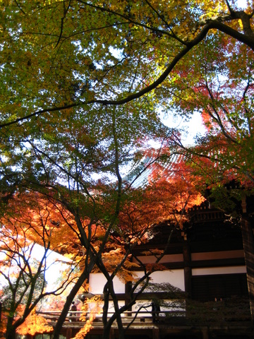 京都で紅葉~真如堂_b0168840_20123786.jpg