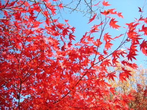 京都で紅葉~真如堂_b0168840_2081423.jpg