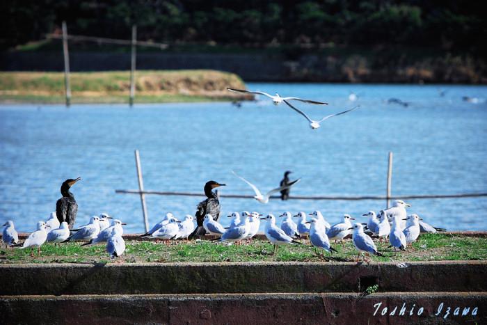 渡り鳥たちがやってきた!ヤァ!ヤァ!ヤァ!_c0181958_1302655.jpg
