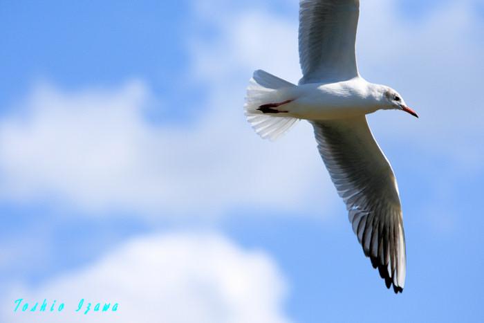 渡り鳥たちがやってきた!ヤァ!ヤァ!ヤァ!_c0181958_1304250.jpg