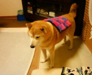 犬川柳、発売になってます_b0011075_18103797.jpg
