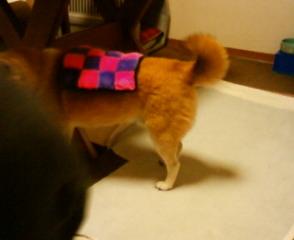 犬川柳、発売になってます_b0011075_18121061.jpg