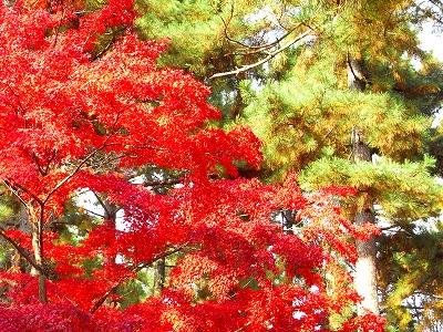 奈良の秋_c0207890_01733.jpg