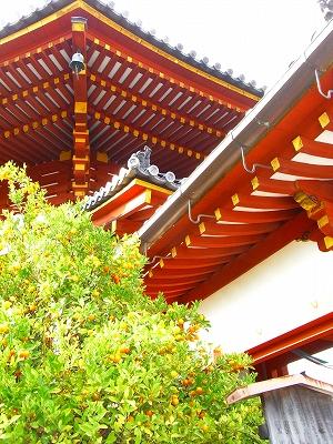 奈良の秋_c0207890_04125.jpg