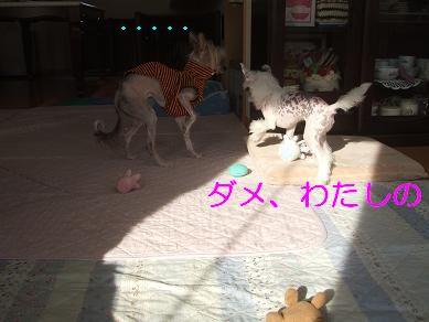 f0179203_13483227.jpg