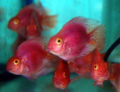 丸い魚・長い魚_a0145907_1549130.jpg