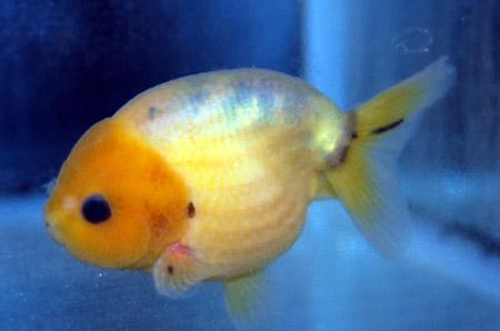 丸い魚・長い魚_a0145907_1641943.jpg