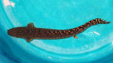 丸い魚・長い魚_a0145907_16850100.jpg
