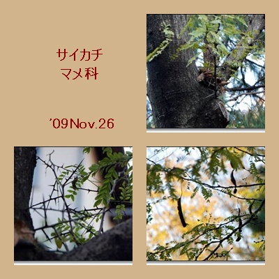 c0128628_10311311.jpg