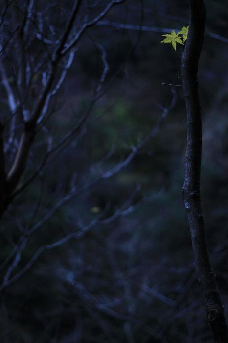 大釜の滝_a0122544_221252.jpg