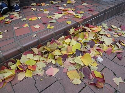 風に吹かれて舞い落ちた綺麗な色の落葉たち_a0004752_20402918.jpg