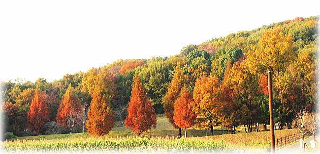 紅葉真っ盛り_f0178858_18205484.jpg