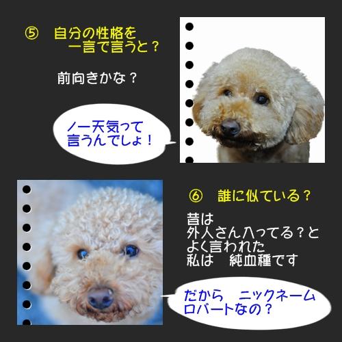 b0187161_982529.jpg