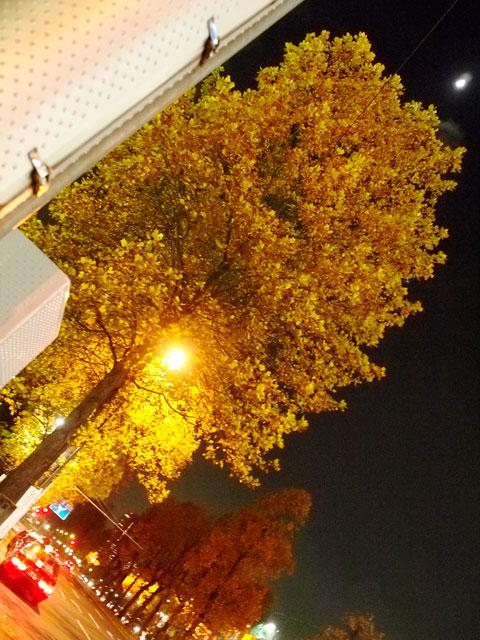 眼鏡と黄葉とクリスマスツリー_a0031363_1648116.jpg