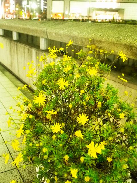 眼鏡と黄葉とクリスマスツリー_a0031363_16503796.jpg