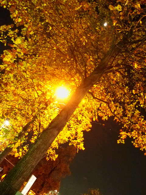 眼鏡と黄葉とクリスマスツリー_a0031363_1650474.jpg