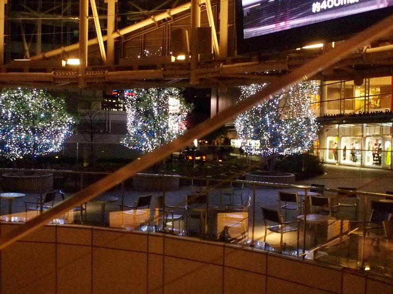 眼鏡と黄葉とクリスマスツリー_a0031363_16534530.jpg