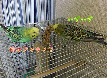 f0196665_018070.jpg