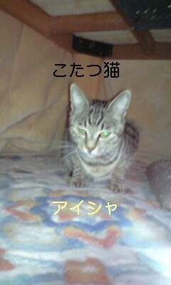 b0112380_104439.jpg