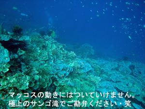 f0144385_13504583.jpg