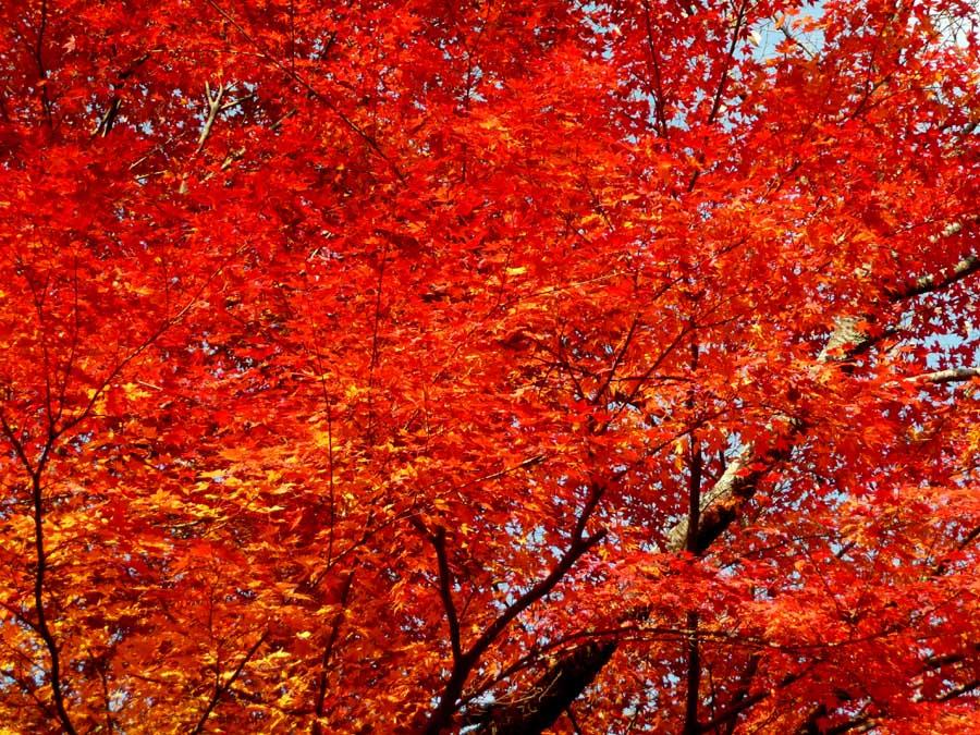 燃えるような「紅葉」と「静寂」の空間!_f0150893_1918637.jpg