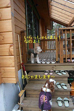 b0021297_22552033.jpg