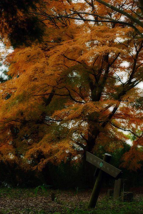 散歩道_c0127403_2157996.jpg