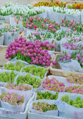 ◆PARIS報告VOL1ランジス花市場◆_b0111306_2394356.jpg