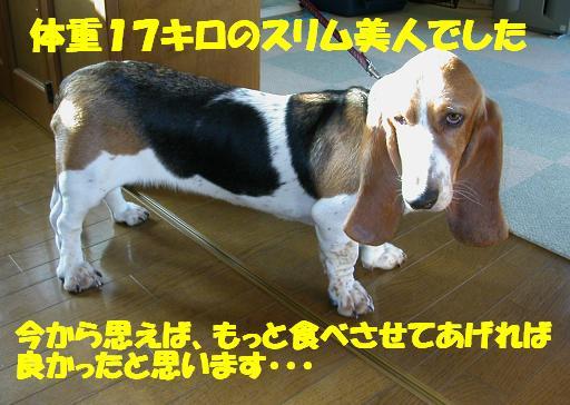 f0121712_023359.jpg