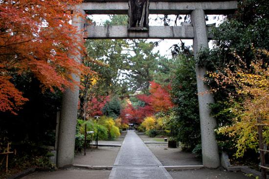 梨の木神社 紅葉の盛り_e0048413_0145428.jpg