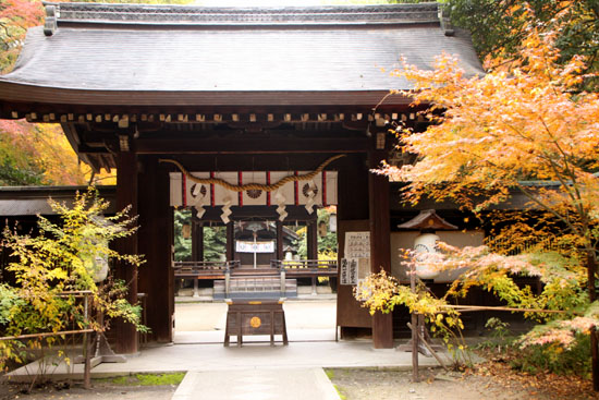 梨の木神社 紅葉の盛り_e0048413_0152080.jpg