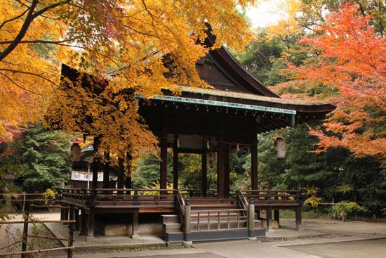 梨の木神社 紅葉の盛り_e0048413_0153648.jpg