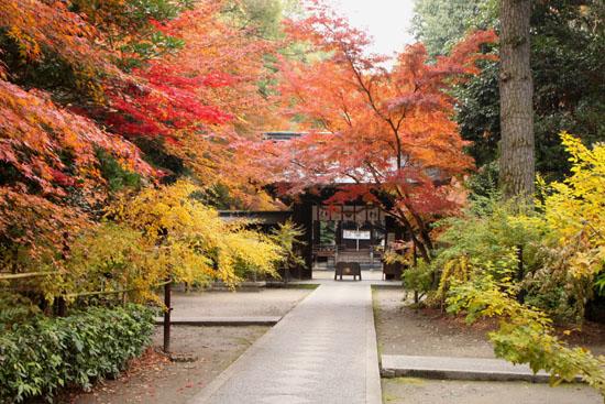 梨の木神社 紅葉の盛り_e0048413_015534.jpg