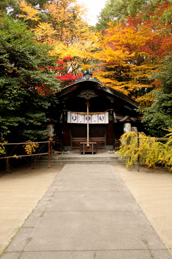 梨の木神社 紅葉の盛り_e0048413_0155653.jpg