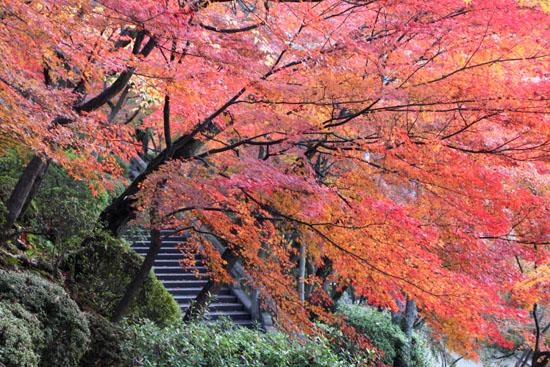 清水寺2 紅葉盛り_e0048413_19332214.jpg