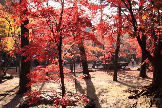 平林寺の紅葉・・・1_d0026817_2053346.jpg