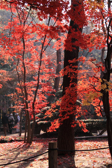 平林寺の紅葉・・・1_d0026817_21125674.jpg