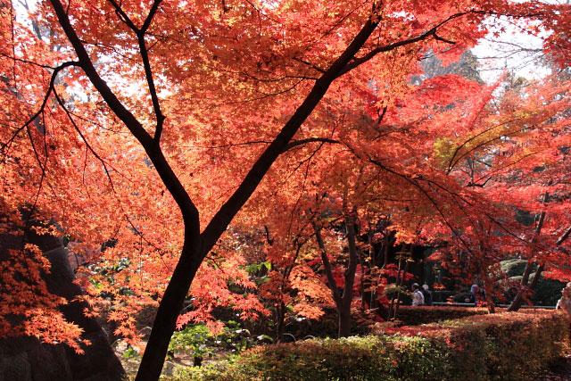 平林寺の紅葉・・・1_d0026817_2115751.jpg