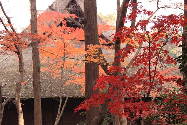 平林寺の紅葉・・・1_d0026817_2132337.jpg
