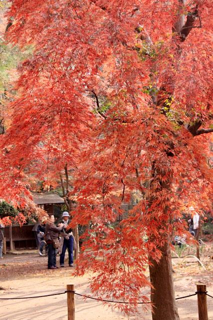 平林寺の紅葉・・・1_d0026817_2151084.jpg